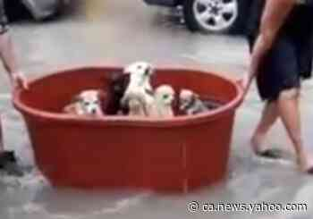 Couple Rescue Puppies After Losing 'Everything' to Storm Hanna Flooding in Mexico - Yahoo News Canada