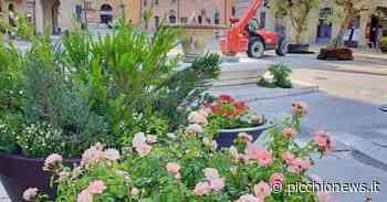 San Severino, Piazza del Popolo diventa un grande giardino all'aperto: il mercato trasloca sino a settembre - Picchio News
