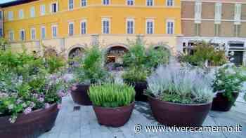 Piazza del Popolo si tinge di verde: fiori e colori invadono il centro di San Severino - Vivere Camerino