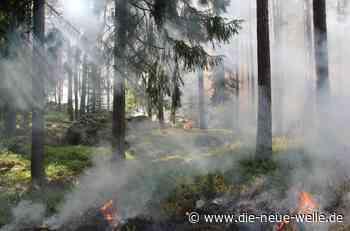 Baden-Baden: Waldbrandgefahr aufgrund anhaltend hoher Temperaturen - die neue welle - die neue welle