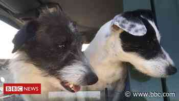 Dogs rescued after eight days in Essex hole - BBC News