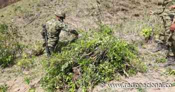 Tres fallecidos en campo minado en zona rural de Puerto Caicedo, Putumayo - http://www.radionacional.co/