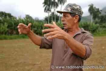 José Ramón Pino, el fitosanitario de la cooperativa (+Video) | - Radio Sancti Spíritus