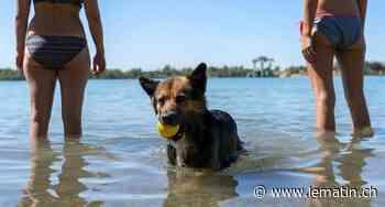 Neuchâtel - Des chiens sont morts empoisonnés sur les rives du lac - Le Matin