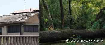 Tromba d'aria a Cossato, scoperchiato tetto in cemento-amianto e alberi sradicati al parco dei Carpini FOTO - newsbiella.it