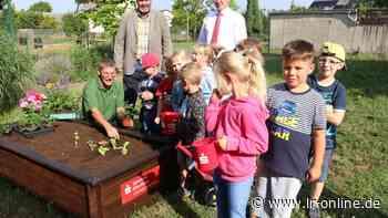 Elbe-Elster: Minigärtner pflanzen in Finsterwalde junges Gemüse - Lausitzer Rundschau