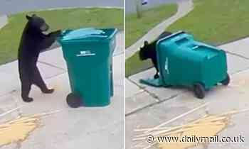 Take out meal! Clever bear is spotted wheeling trash can along driveway before tucking into scraps