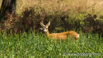 Suche nach Konsens in der Forst-Jagd-Frage - top agrar online