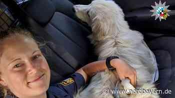 Gunzenhäuser Polizei hat ein Herz für Hunde - Nordbayern.de
