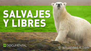 Salvajes y libres - RT en Español