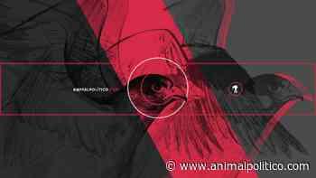 Libres de cártel - Animal Político