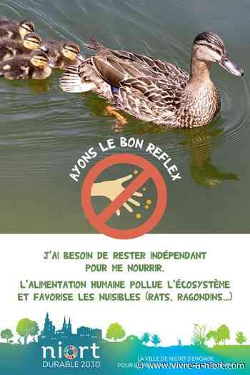Attention au nourrissage des animaux sauvages : Mairie de Niort - Vivre à Niort