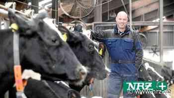 Rees: Milchbauer Hübers muss dank Regen kaum Futter zukaufen - NRZ