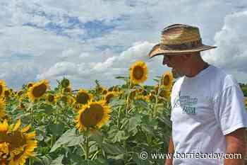 Farm brings sunshine to Innisfil during pandemic (8 photos) - BarrieToday