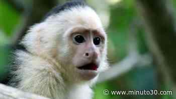 ¡Los tenían de mascotas! En Yondó, Antioquia decomisaron 24 animales silvestres que estaban en cautiverio - Minuto30.com