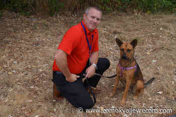 Abused dog rescued on Vancouver Island is now a happy hound - Comox Valley Record