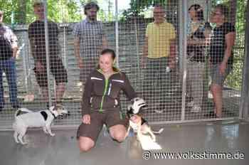 Hunde: Guter Tag für Tierschutz in Halberstadt - Volksstimme