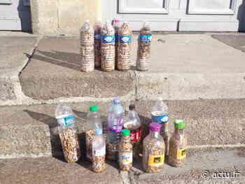 Sur le port d'Honfleur, plus de 10 000 mégots ramassés en une heure par des bénévoles - Le Pays d'Auge