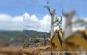 Muere trabajador de PC mientras podaba un árbol en Chilpancingo - Quadratín Michoacán