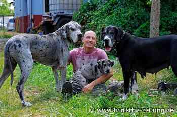 Wie kommt man eigentlich zu einer Deutschen Dogge? - Lahr - Badische Zeitung
