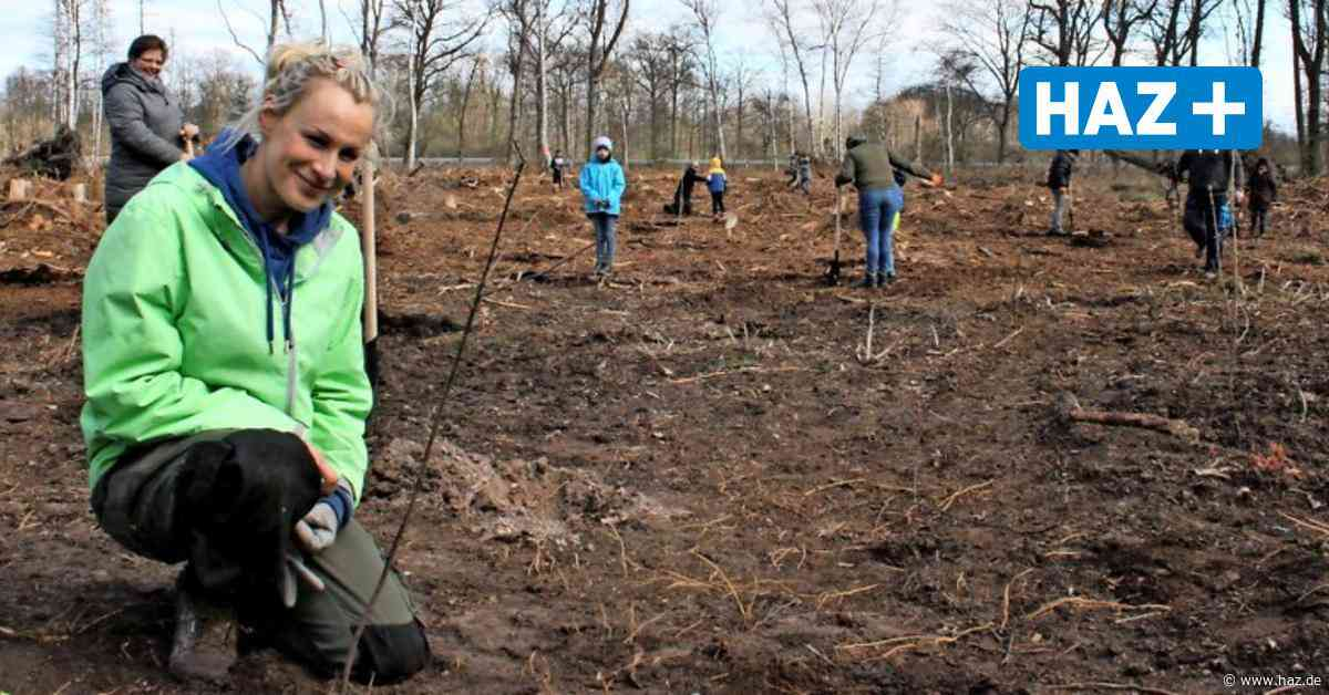 Isernhagen: Wildtierhilfe braucht Hilfe bei Baumpflege - Hannoversche Allgemeine