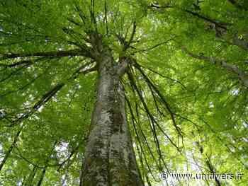 SORTIE NATURE « Les forêts ne meurent jamais ! » (64) oloron sainte marie samedi 26 septembre 2020 - Unidivers