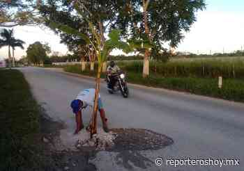 En protesta, siembran planta en mega-bache de la vía Sitilpech-Izamal - Reporteros Hoy