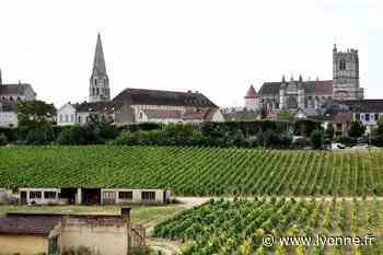 Sur la piste des anciens vignobles d'Auxerre, des histoires de cinq minutes pour rêver à Sens... Nos idées de sorties dans l'Yonne pour ce samedi 1er août - L'Yonne Républicaine