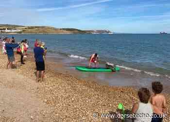 Sammy the seal goes paddleboarding on Weymouth beach - Dorset Echo