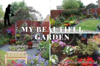 Readers from Chickerell and Weymouth show off their havens in My Beautiful Garden - Dorset Echo