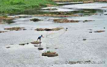 State to ensure environmental flow of rivers - The Hindu