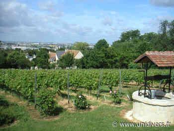 Visite des vignes de Sucy Vignes de Sucy-en-Brie samedi 19 septembre 2020 - Unidivers