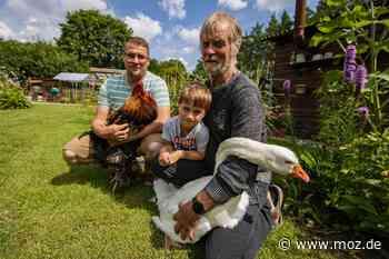 Hobby: Paar aus Eberswalde züchtet seltene Hühnerarten - Märkische Onlinezeitung