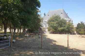 À Issy-les-Moulineaux, les animaux ont aussi très chaud - France 3 Régions