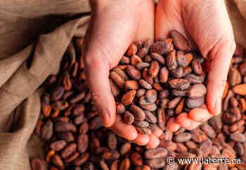 18 tonnes de cacao volé saisies sur une terre agricole de Laval - La Terre de chez nous