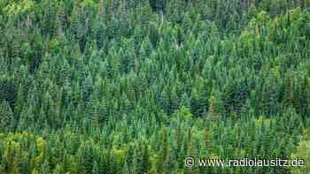 Teils hohe Waldbrandgefahr in Sachsen - Radio Lausitz