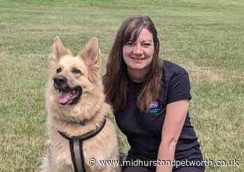 Helping our furry friends find their forever homes - Midhurst and Petworth Observer