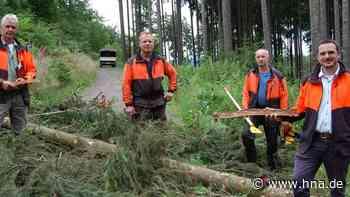 Domanialwälder in Waldeck-Frankenberg in schwieriger Lage: Der Borkenkäfer und der Klimawandel setzen den B... - hna.de