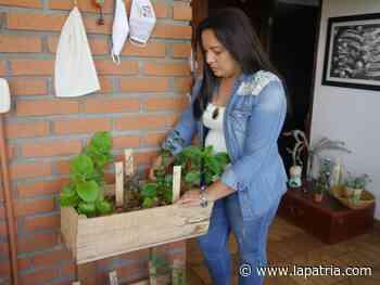 Minihuertas, caseras y orgánicas hechas en Palestina (Caldas) - La Patria.com