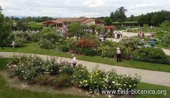 Ballades commentées de la Roseraie de Saint Galmier - Tela Botanica