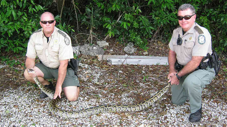 Florida Removes 5,000 Pythons From The Everglades