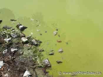 Blue-green algae confirmed at Muskrat Lake in Cobden - renfrewtoday.ca