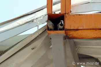 Tierschutz: PETA schaltet sich bei Baumarkt-Abriss in Vogelsdorf ein - Märkische Onlinezeitung