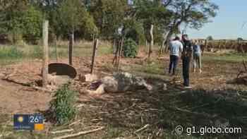 22 animais vítimas de maus-tratos são resgatados após denúncia em Pirassununga - G1