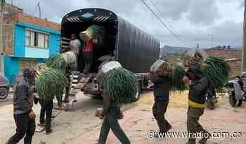 Productores de cebolla en Aquitania demandan a la central de abastos de Bogotá - W Radio