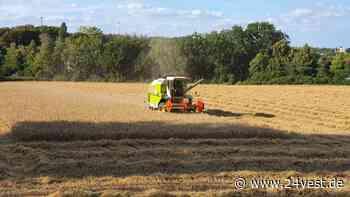 Oer-Erkenschwick: Nur durchschnittliche Weizenernte auf dem Bickefeld - 24VEST