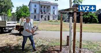 Markkleeberg bittet Bürger im Hilfe bei Bewässerung von Bäumen - Leipziger Volkszeitung