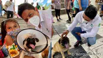 Gallardo inició campaña de vacunación para perros y gatos en Rioverde - La Orquesta
