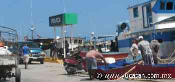 Pocos irán por pulpo: La incertidumbre predomina en Progreso - El Diario de Yucatán