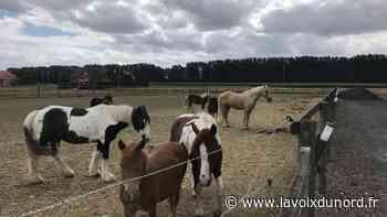 Laventie : des cavaliers de l'équipe de France au haras de l'Ermitage pour soutenir la recherche contre le Covid-19 - La Voix du Nord